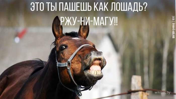 Прикольные картинки про лошадь и работу, ммс день рождения