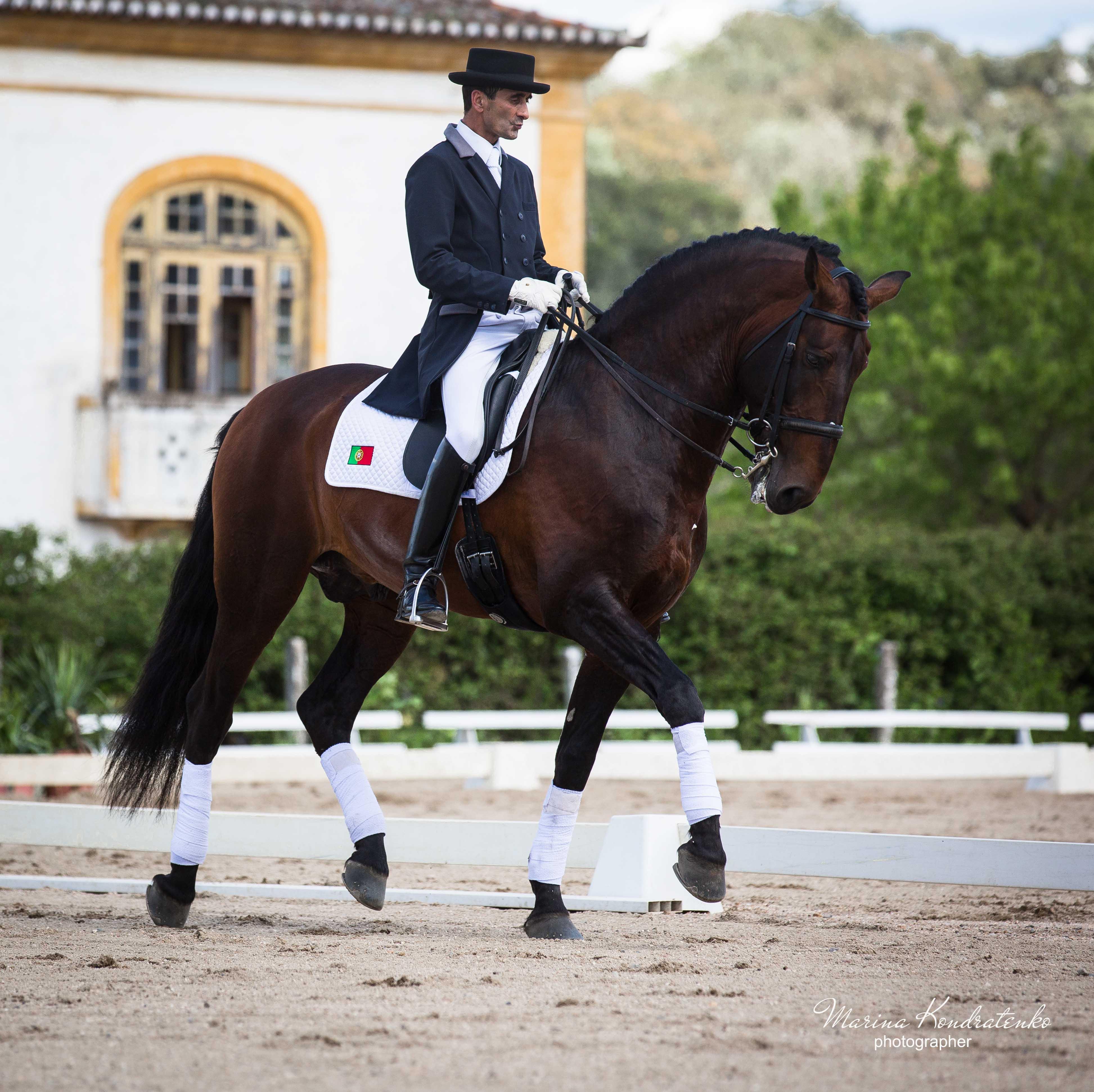 как фотографировать конный спорт старались, отрастить получится