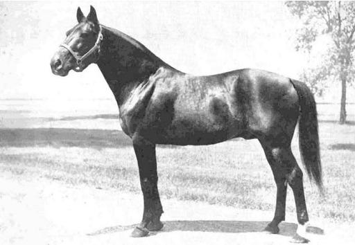 Bill Gallon (US) 1938 г.р.jpg