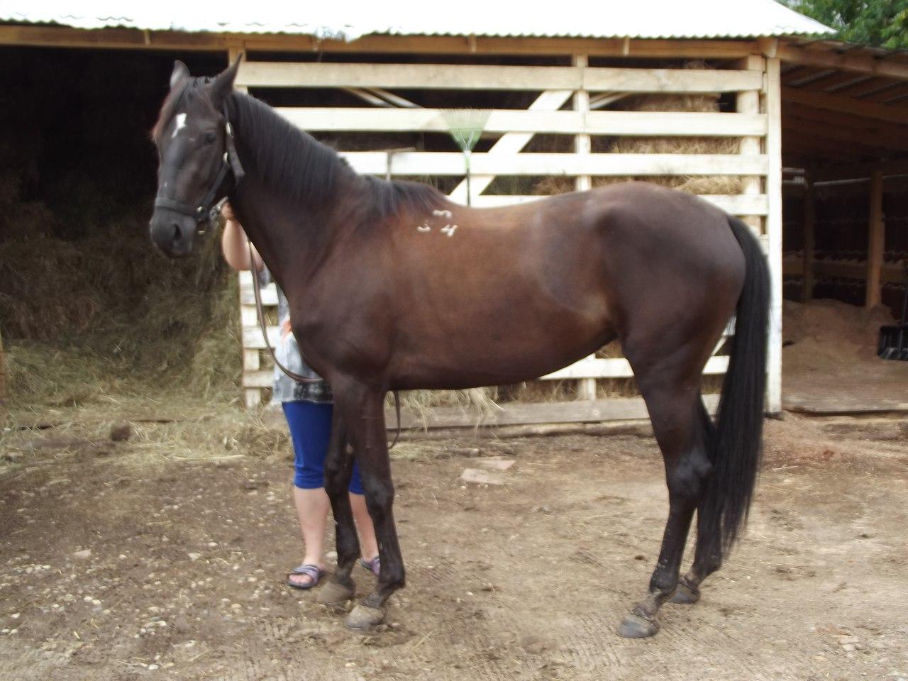 Запирающий эффект суставов лошадиная сила синовит реактивный коленного сустава