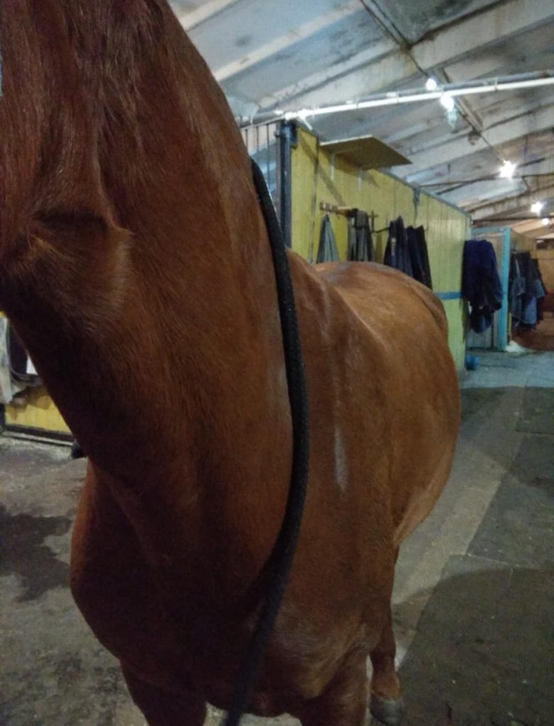 Лошади сильно похудела