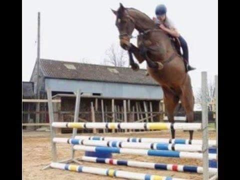 funny horse fails - 595×547