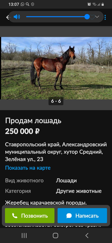 Screenshot_20210210-130714.jpg