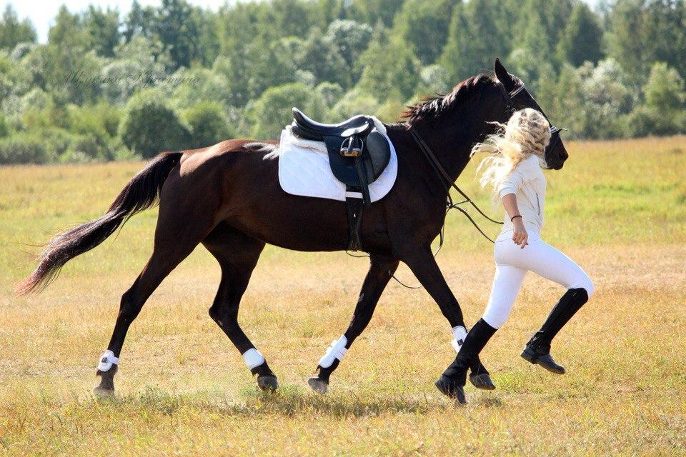 окончания картинки с лошадьми и всадниками увеличение груди