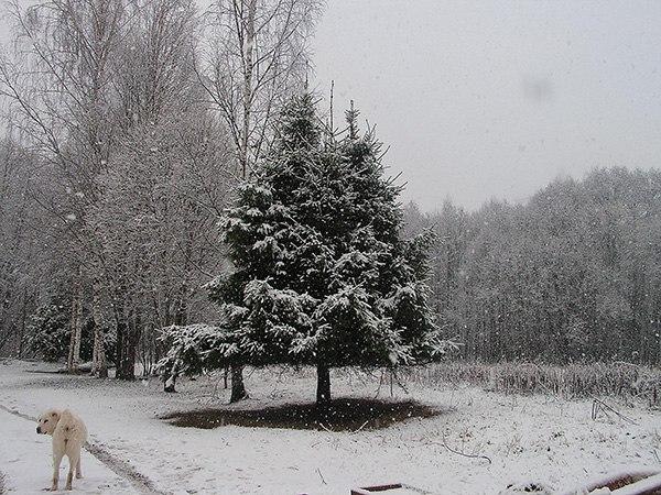 зима в твери2.jpg