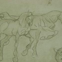 Снаряжение для лошадей седла упряжи казачье спортивное поставки как выигрывать ставки в букмекерской конторе чтобы выигрывать