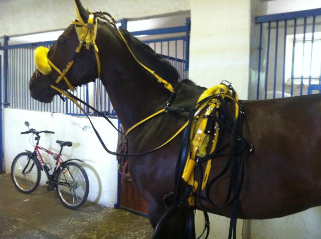 Как сделать ходок для лошади