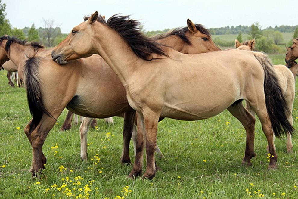 Инструкция бонитировки лошадей